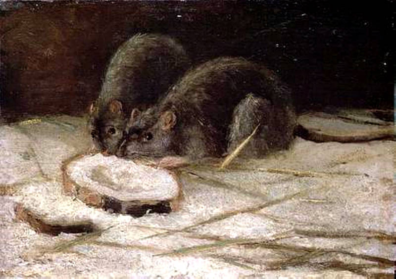 Two Rats 1884
