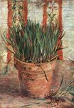 Flowerpot with Chives 1887