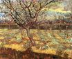 Apricot Trees in Blossom 1888
