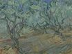 Olive Grove Bright Blue Sky 1889