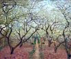 Claude Monet - Orchard in Bloom 1879