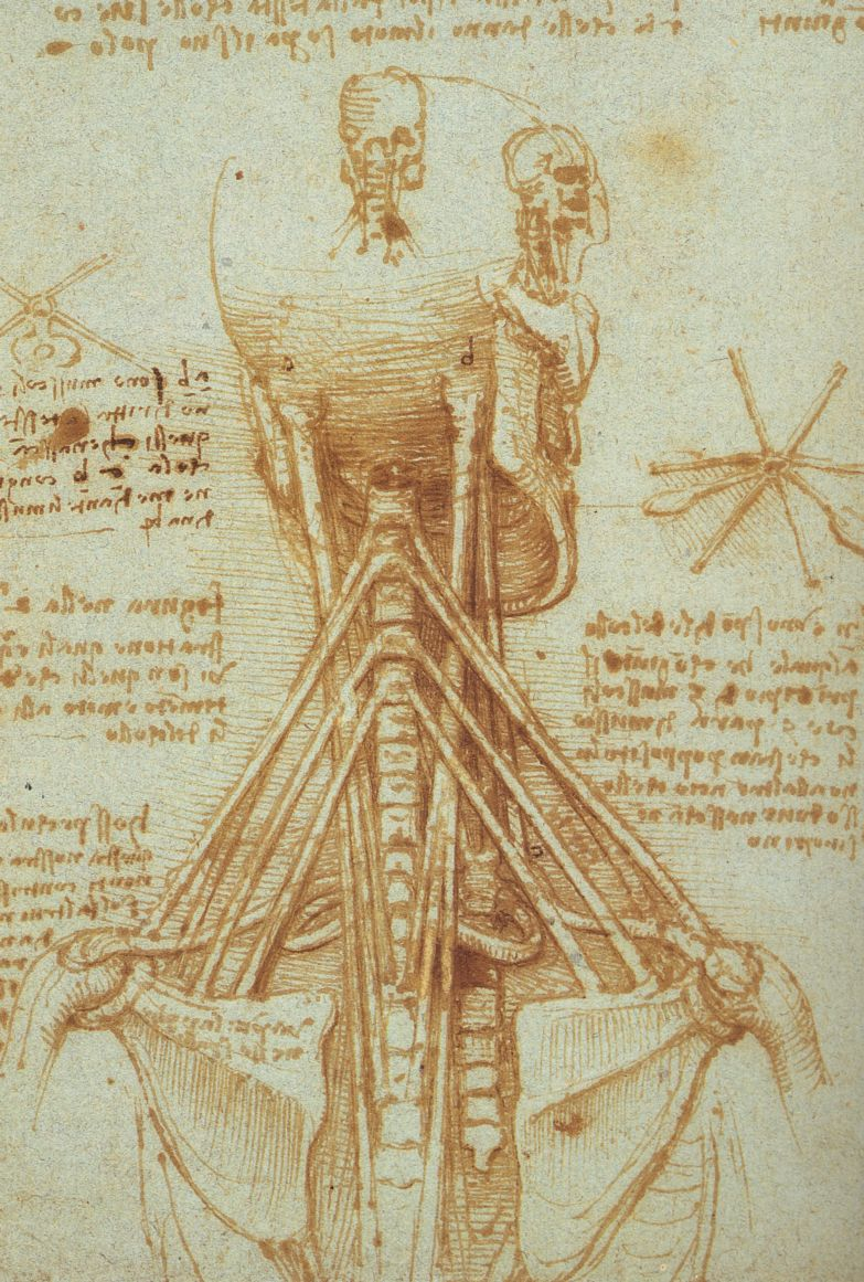 Leonardo da Vinci - Anatomy of the Neck 1515