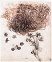 Leonardo da Vinci - Stof Bethlehem and other plants 1506