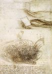 Leonardo da Vinci - Studies of Water passing Obstacles and falling 1508