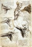 Leonardo da Vinci - Anatomical studies of the shoulde 1510-1511