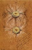 Study of Rosettes for Lady's Dress 1874